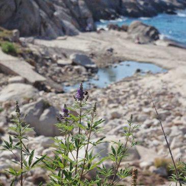 Isola di Montecristo – Riserva naturale biogenetica