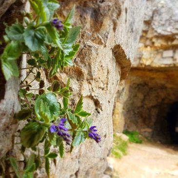 La strada delle 52 gallerie – Monte Pasubio